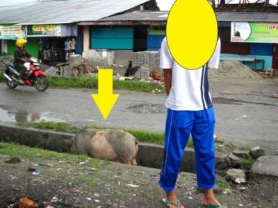 Babi Di Saluran Air